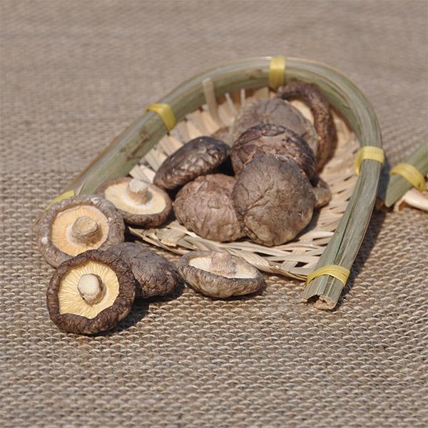 dried mushroom